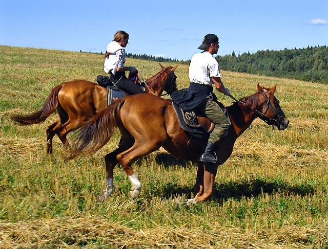 конный туризм краснодарского края